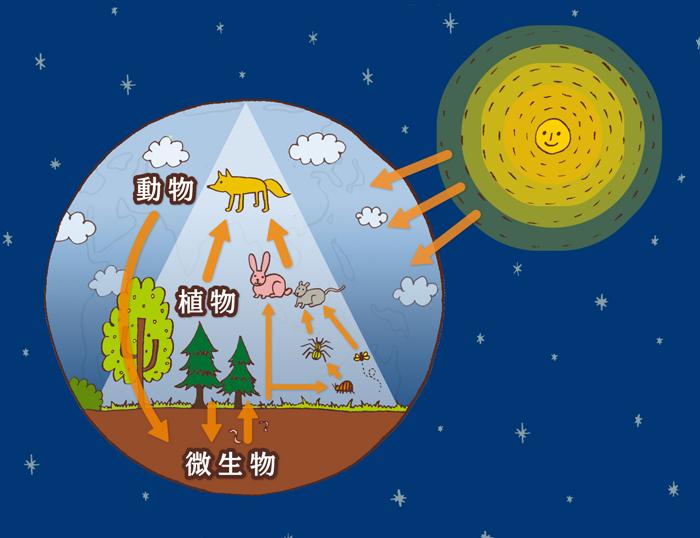 NHK食物連鎖のイラスト